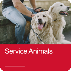 Click to view Service Animals